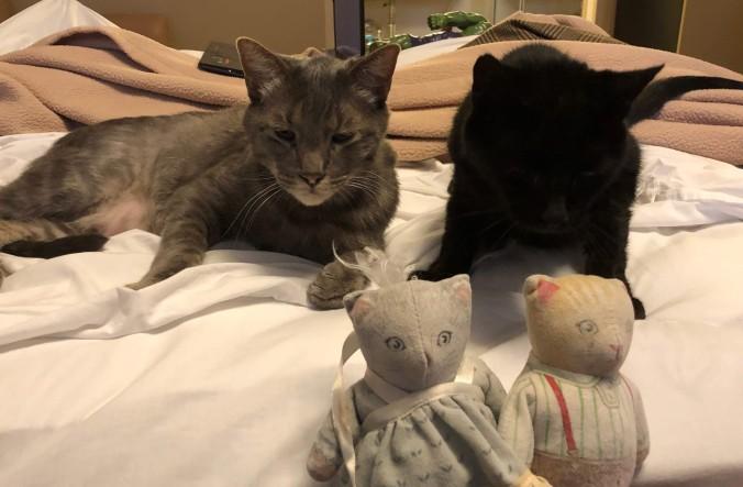 cats at hotel